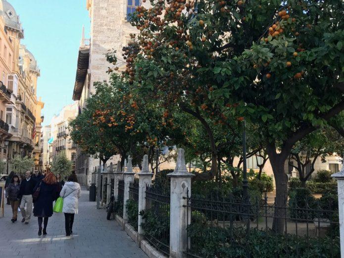 Oranges in Valencia