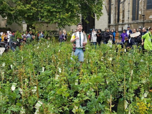 More than 400 MPs join campaign calling for urgent reforestation in UK