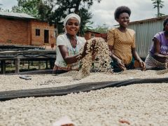 Scottish coffee project boosts Rwandan economy