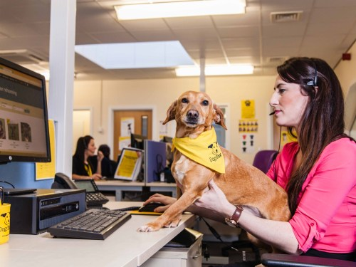 Remote support for dog adopters during coronavirus pandemic
