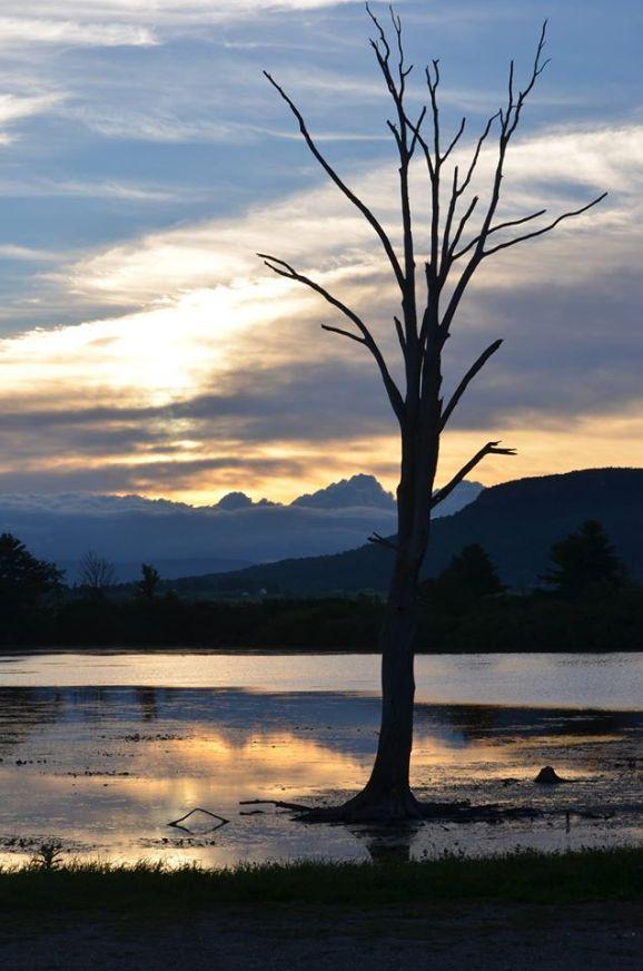 dead-creek-addison-county-tree