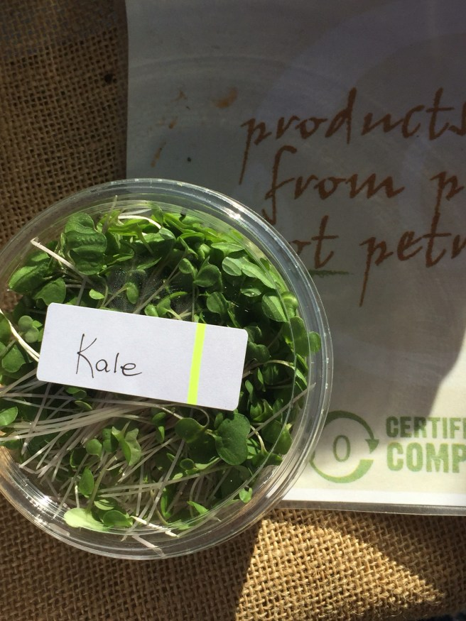 Kale microgreens | The Rose Table