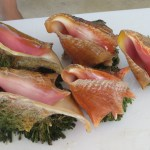 Catching Conch with Caicos Dream Tours | The Rose Table
