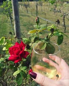 San Martino Winery and Vineyard | The Rose Table