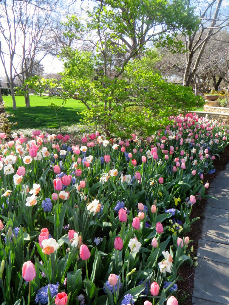 Dallas Blooms 2017, Dallas Arboretum
