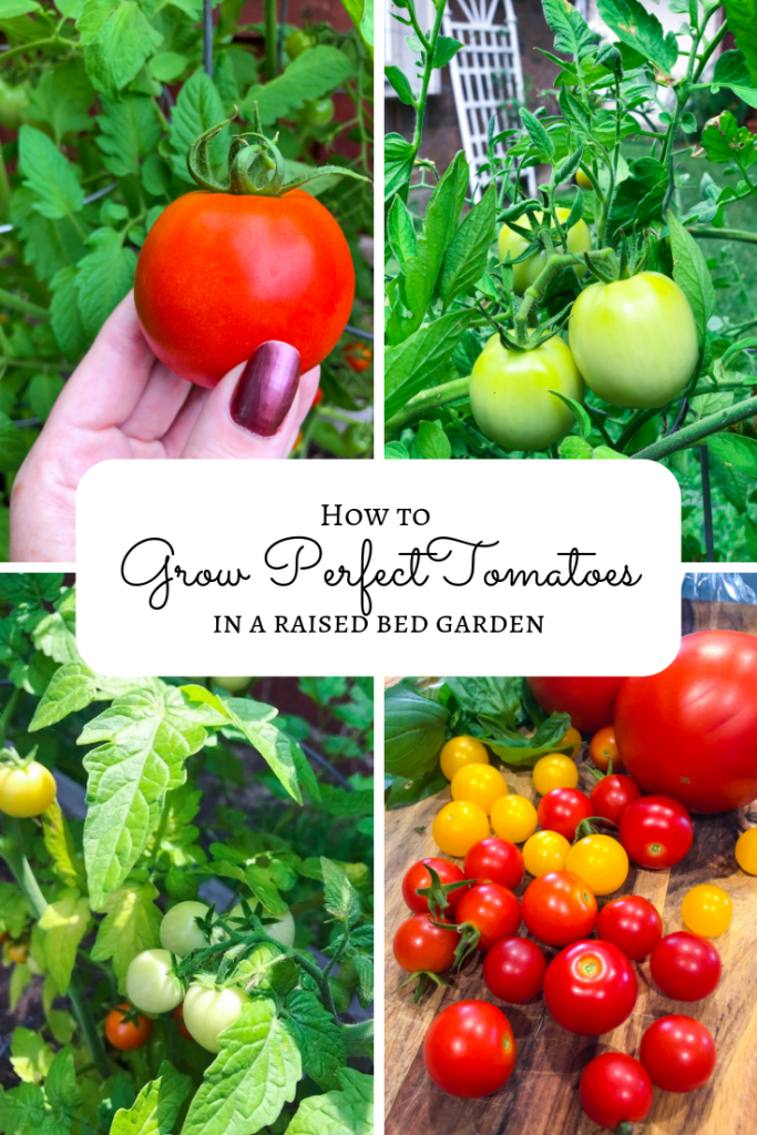 How to Grow Tomatoes in a Raised Bed Garden