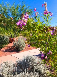 Red Hills Desert Garden Saint George Utah | The Rose Table