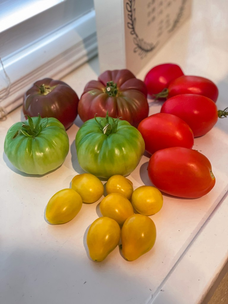 How to Grow Tomatoes | How to Ripen Tomatoes