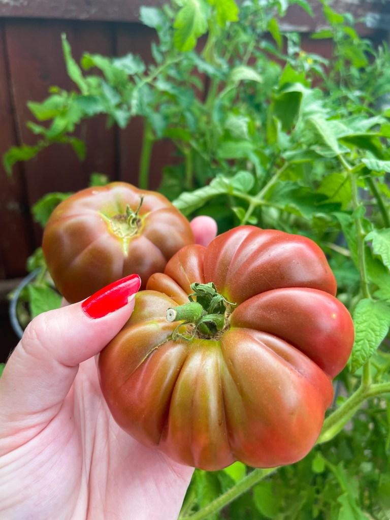 Growing Black Krim Tomatoes