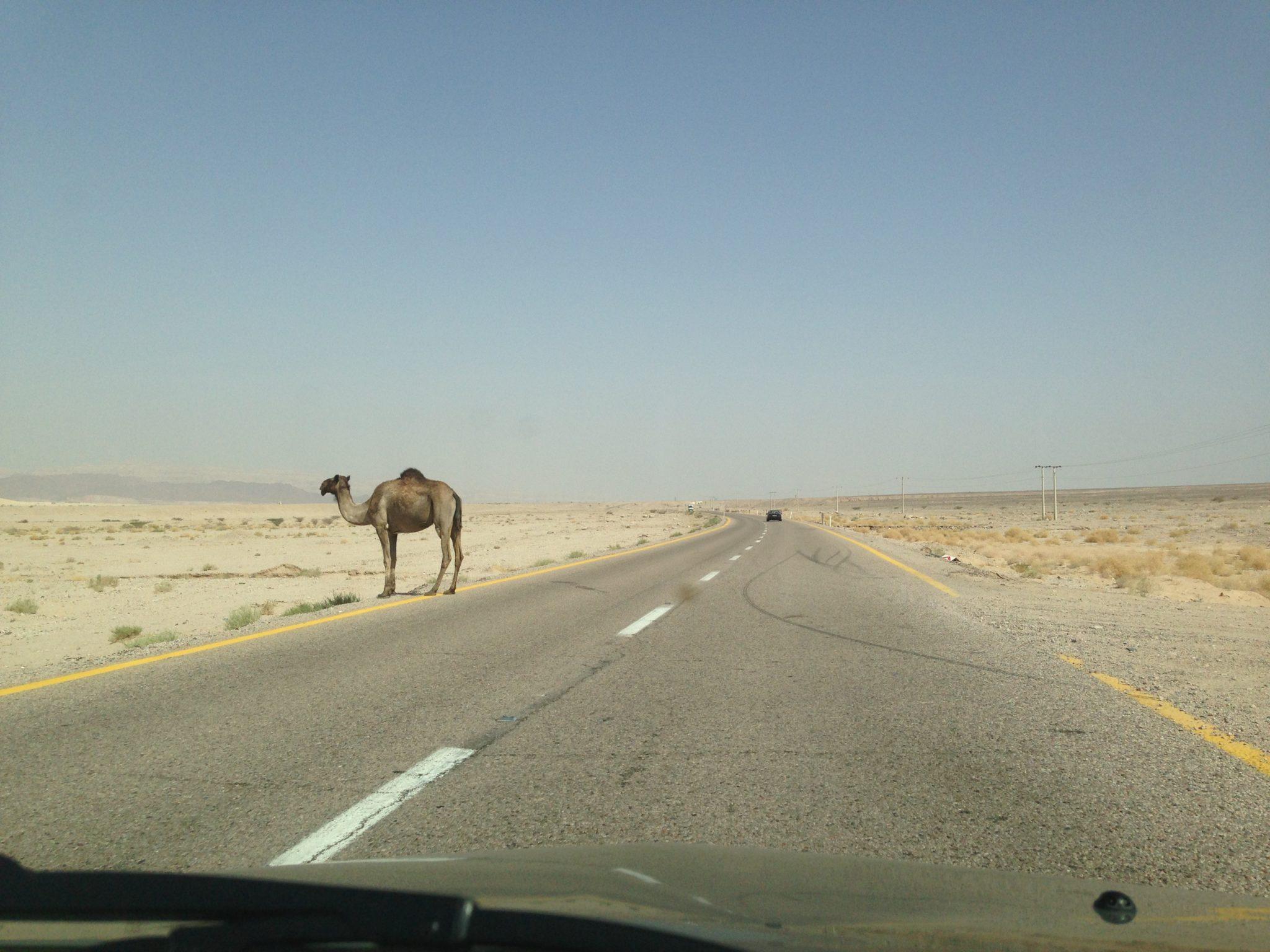 new concept b916a 5b207 Benefits of Renting a Car in Jordan - Should You Hire a Car