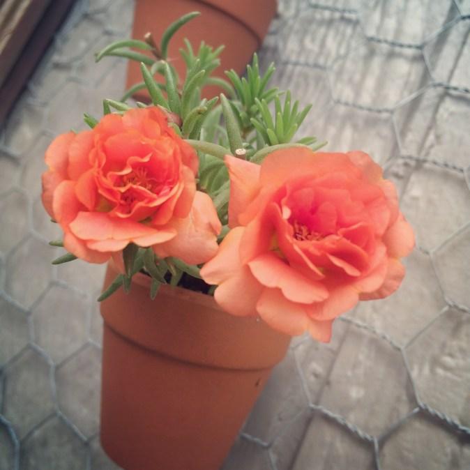 Terra Cotta Window Planter Rose Moss