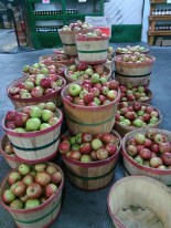 Carvers orchard 10-2016 - apples anyone