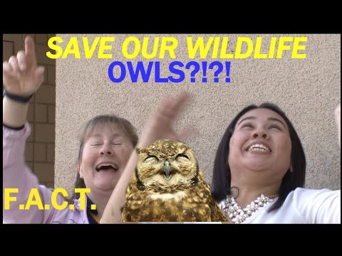 WHO WHO Saw the Owls at CSUB?