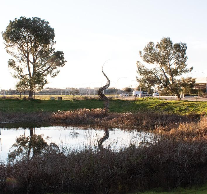 After Joseph Mendez cleaned the area surrounding the pond, the sculpture of the dragon tail is easily visible. Photo by Fernanda Martinez/ The Runner