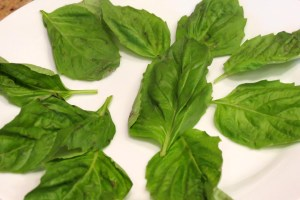 Basil on the plate