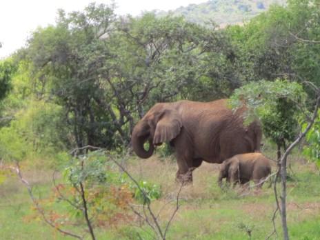 Mamma and baby elephant!