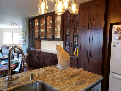 Dining Buffet with Cat
