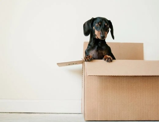 Essential Items You Should Pack for the Big Move