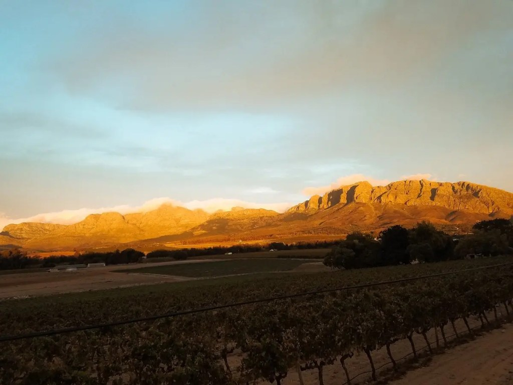 Sunset over Wine Farm - A Row of Grape Vines - Lucia Capretti  ©