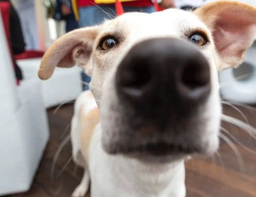 Adopting Your First Pet in South Africa