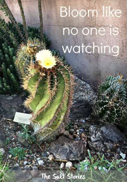 The Salt Stories: Cacti Motivational Posters
