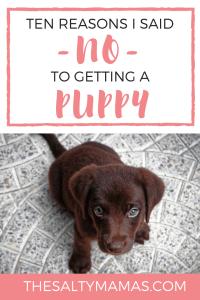 #puppy #canihaveapuppy #shouldwegetapuppy #kids #kidsanddogs #kidsandpuppies #puppiesandkids #aboyandhisdog #familydog
