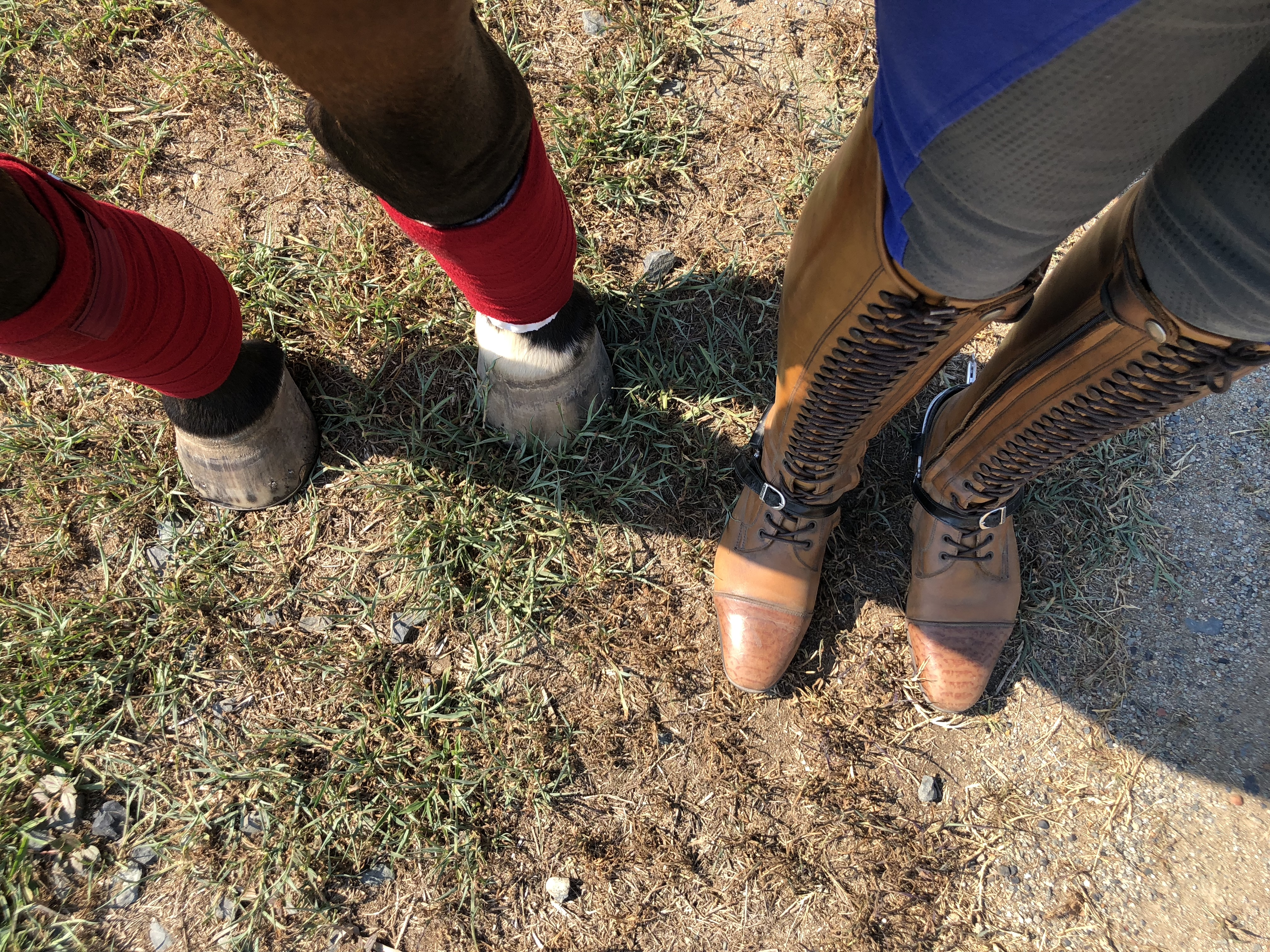 Confession time – My worst habit as a horse rider