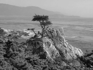 The picturesque lonely cypress tree in-Point Lobos is an iconic spot of the Monterey Peninsula. Photo courtesy of Monterey Movie Tours.