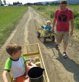 Berry picking chariot race