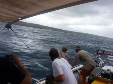 Chad Leavitt's first sailfish comes to the boat, off Morrungulo (c) BoaGente
