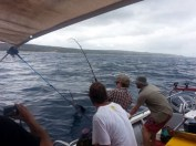 Chad Leavitt's first sailfish, released off Morrungulo, on the way to Pomene (c) BoaGente