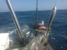 Yellowfin Tuna MYDO Spoon