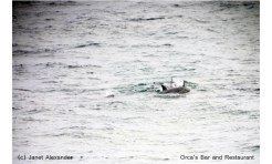 Bottlenose dolphins love to hunt in the bay