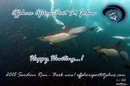Shark and Sardine Chaos