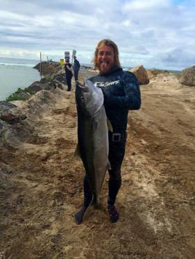Yellowtail speared in Oz on a shore dive