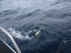 Tuna fishing on Protea Reef is right on the very top of the list of the most fun things to do in the entire world. Until the sharks come. And that's when you need to visit The Tackle Box! ;-)