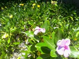 Casa na Duna is in flower