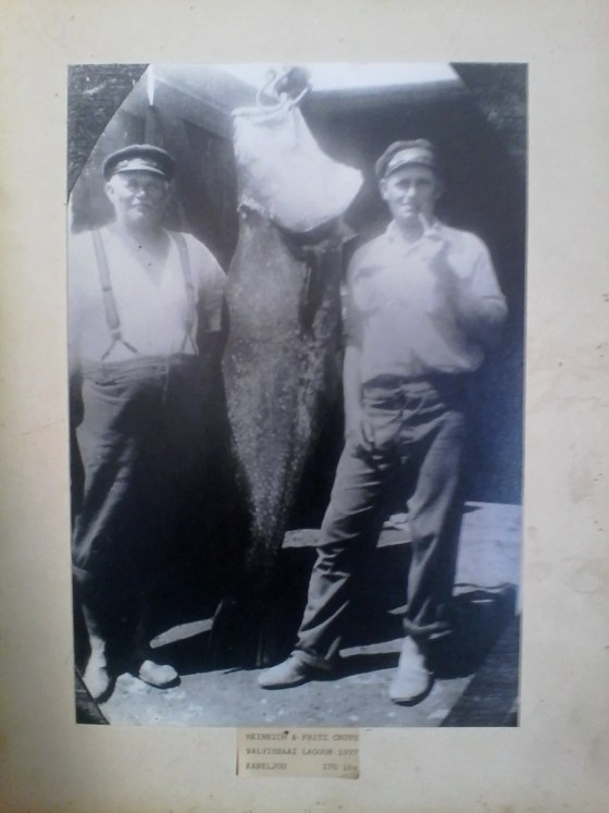 For a taster of the kind of fish you could be tussling with, this fish was taken in 1937 by brothers Frits and Heinrich Cruys, in the Swakopmund lagoon. It weighed 175lbs!!! You can by MYDOs in Swakopmund, at Leons Fishing Tackle.