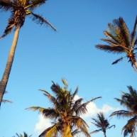 lalaland-slider-coconuts