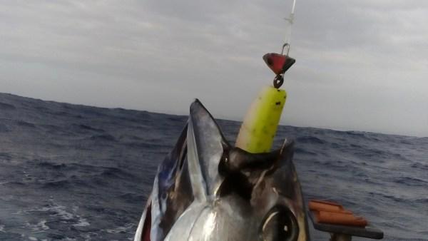 Protea Reef Tuna are suckers for the MYDO Luck Shot Mini