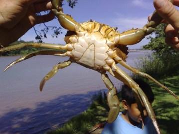 The crabs of the Umzimkulu
