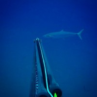 Report weekly KZN Spearfishing