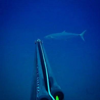 Report weekly KZN Spearfishing