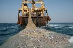 Hands off our Sardines! Trawler watch. Keep these destructive forces from our waters