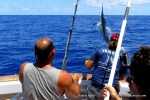 Marlin on the Great Barrier Reef