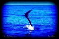 San Sebastian is a sailfish hot spot