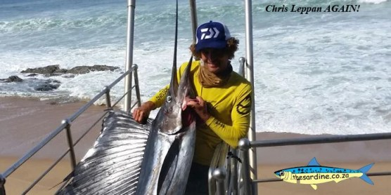Chris Leppan does it again with this lovely sailfish