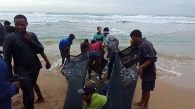 Sardines netted at Scottburgh - photo by Jay Steenkamp R900 a crate of sardines 2017