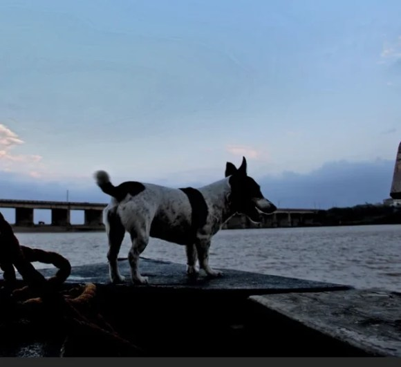 Pepsi the barking fish finder really knows when the fish come about