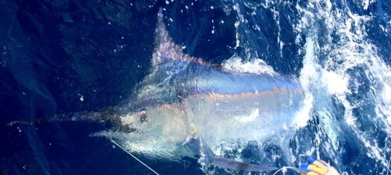 Bazaruto October Fishing Report by Captain Duarte Rato